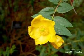 logan-botanic-garden-05