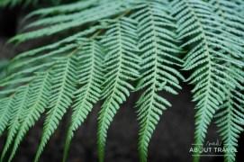 logan-botanic-garden-10
