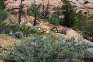 ザイオンの鹿