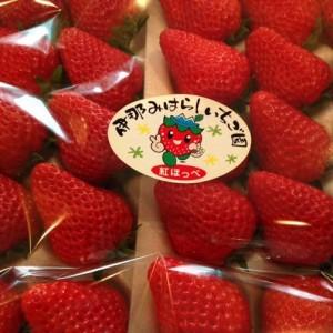 furusato-tax-strawberry