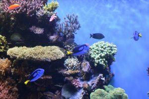モントレー水族館