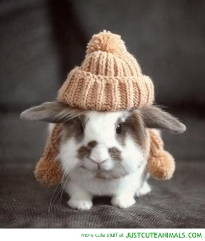 funny-cute-animal-pics-bunny-rabbit-with-cosy-hat-picture