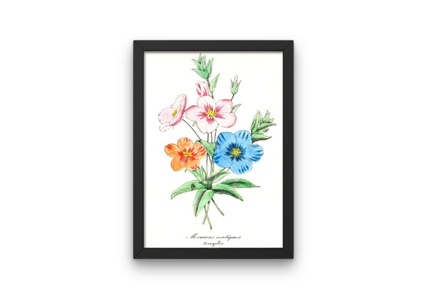 Mourons Exotiques, Pimpernel, French, Le Maout botanical print