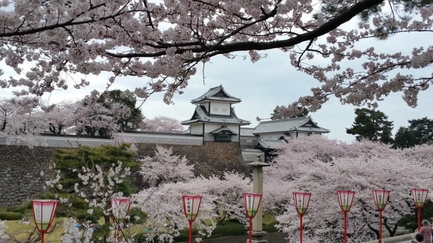 Tokyo Blossom Amy Vatanakul Foap