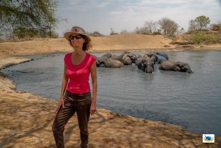 Elisabeth Dancet Documentary Web Series Animal Protection Elephant Protection
