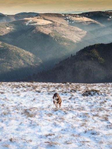 Nova court dans la neige