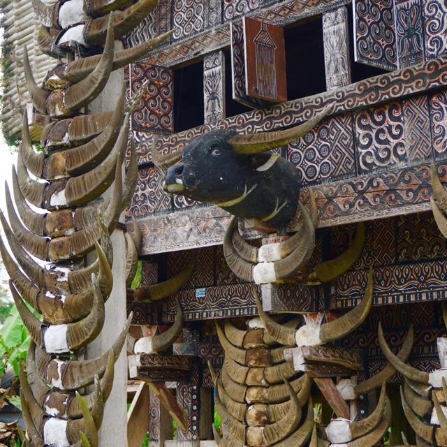Kepala Kerbau di Tongkonan