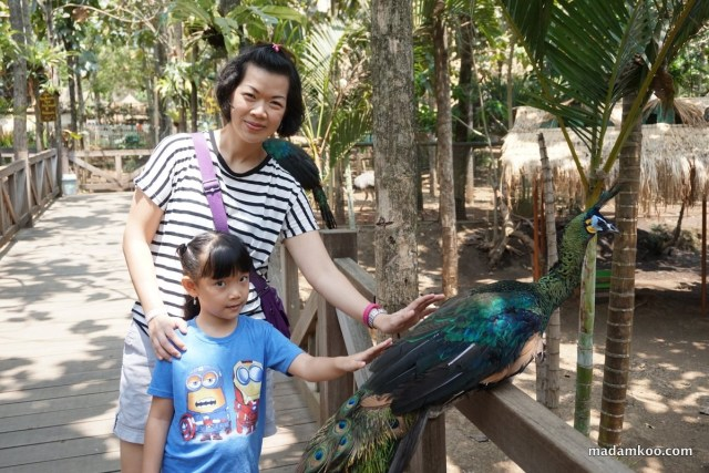 Seumur-umur bisa megang burung merak :)