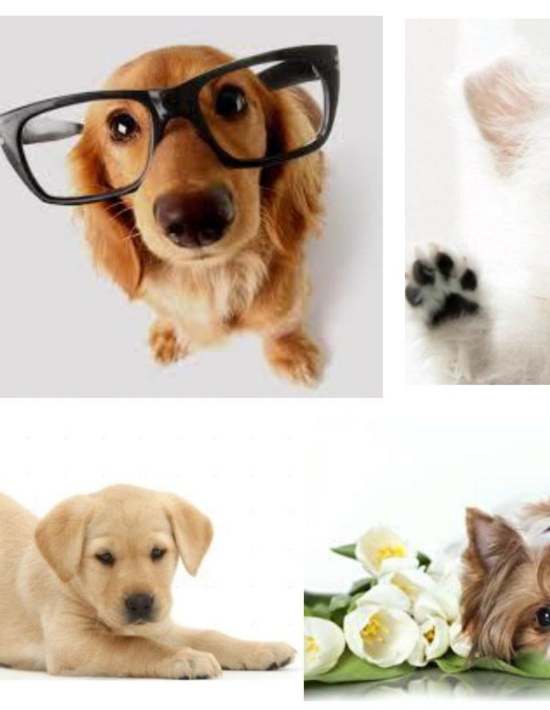 """Водорастворимая бумага """"Собачки 3"""""""