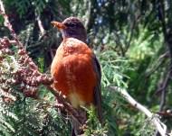 Mama Bird (photo by Karen Molenaar Terrell)