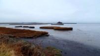 Padilla Bay Mudflats (Photo by Karen Molenaar Terrell)