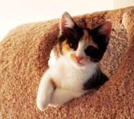 Clara in her Cat Fort