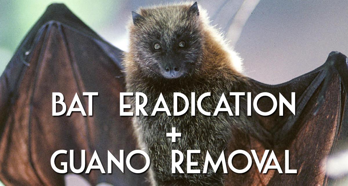 Bat Eradication and Guano Removal by MadCity Environmental