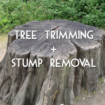 Tree trimming + stump removal in Madison, WI
