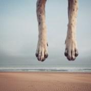 Flying dog legs