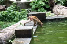 Drinking from the swimming pool