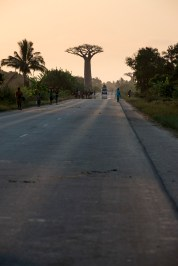 Baobab at the end of the road.