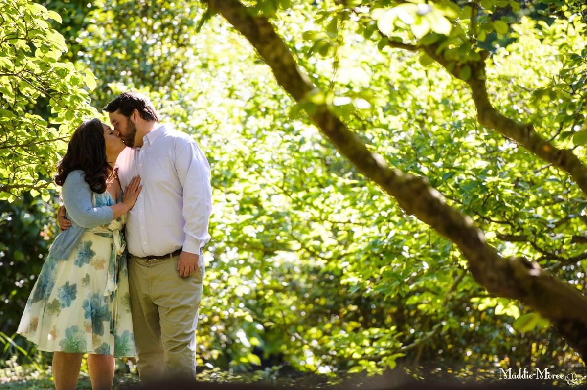 Magnolia trees Botanic Maddie