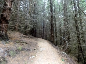 Sketchy Queenstown Hill Forest