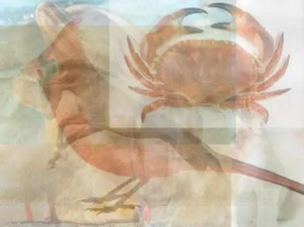 3-28-e1490731188117 | Какое животное вы увидели первым на картинке? Тест на характер