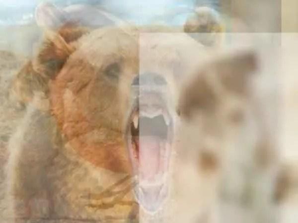 8-19-e1490731312894 | Какое животное вы увидели первым на картинке? Тест на характер