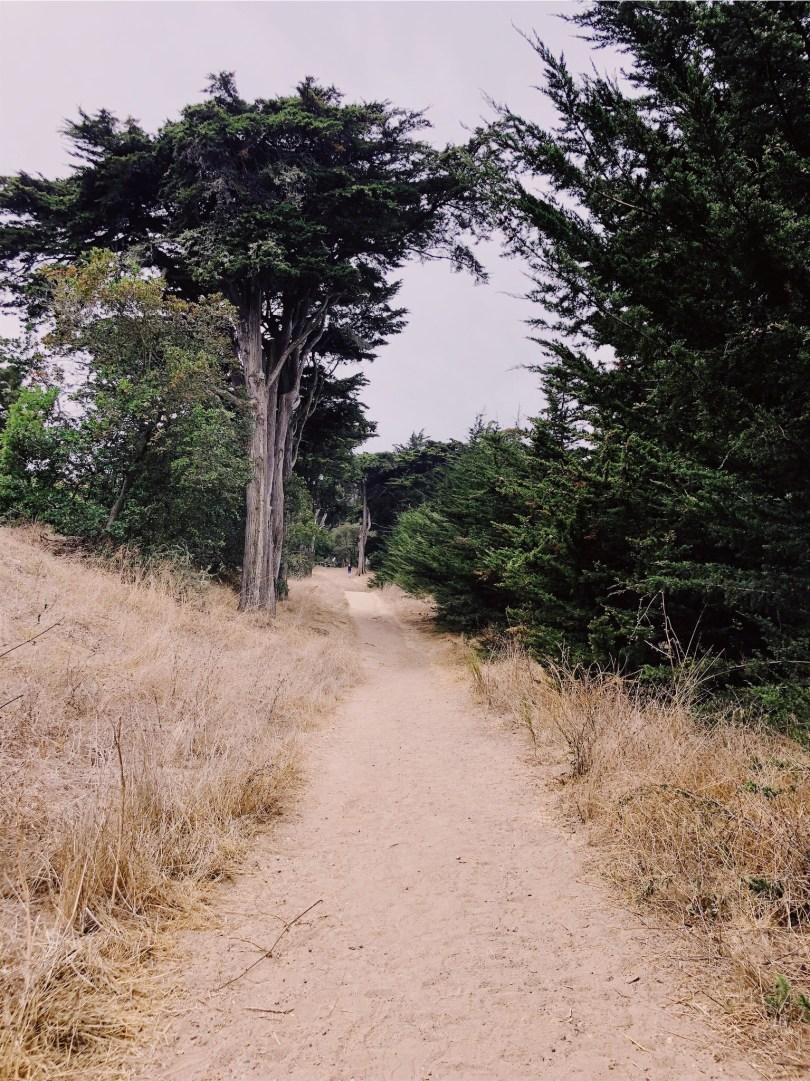I love trees n trails.