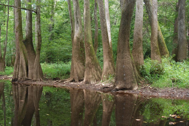 Congregating in Congaree National Park