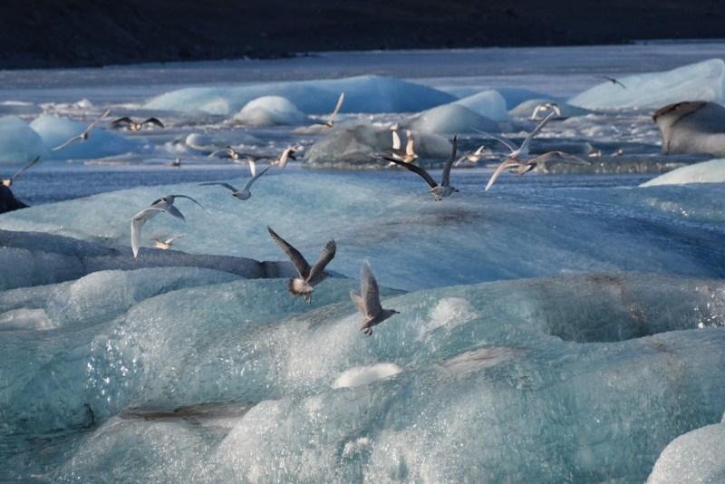 jokulsarlon-glacier-lagoon-7