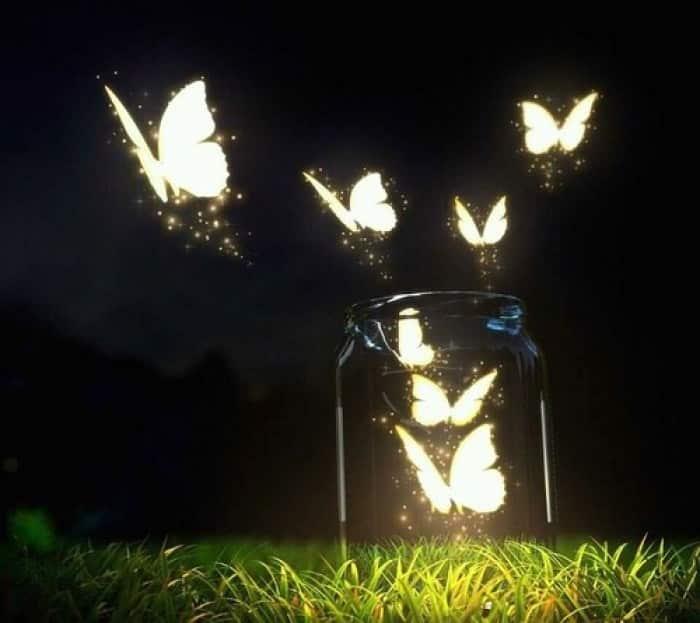 Kupu - kupu Malam
