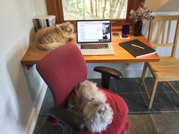 Leo (silver Persian, chair) and Parker (gold Persian, desk) over see the first draft of I See You (Oracle 2)