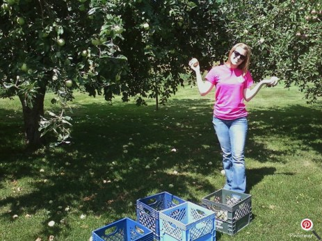 The beginning of our apple picking adventure.