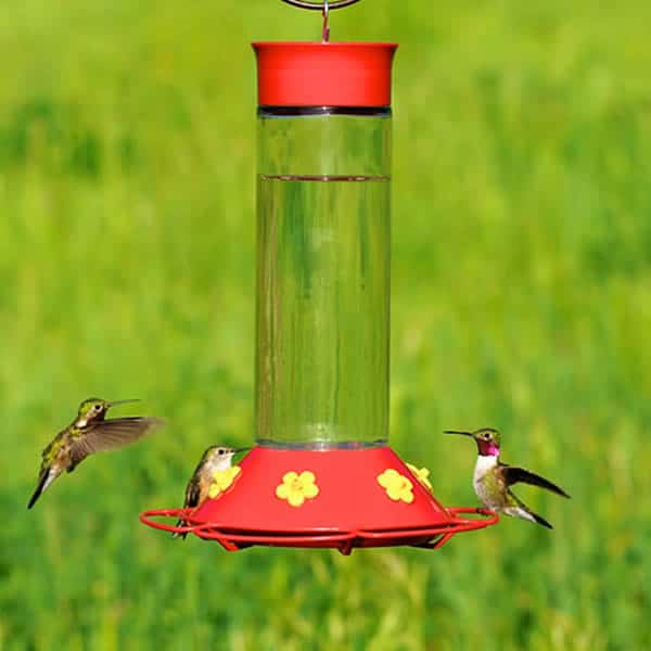 image relating to Printable Hummingbird Nectar Recipe named Do-it-yourself Hummingbird Foodstuff