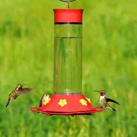 hummingbird food and feeder