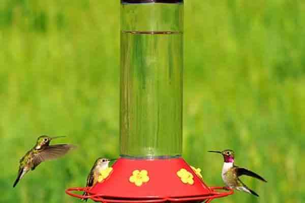 Want Hummingbirds? Make This Easy Homemade Hummingbird Food Recipe!