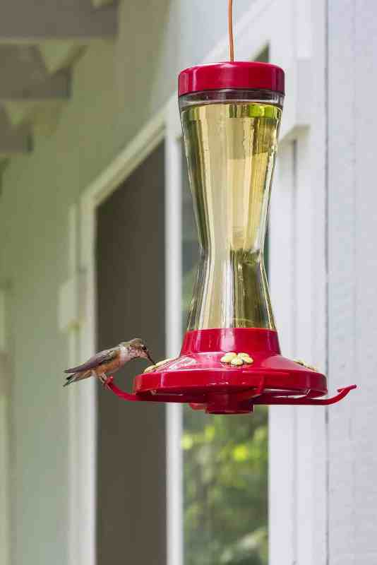 DIY hummingbird food like what's in this feeder that a hummingbird is sipping doesn't need red food dye.