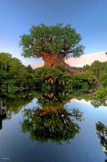 Disney World Tree of LIfe