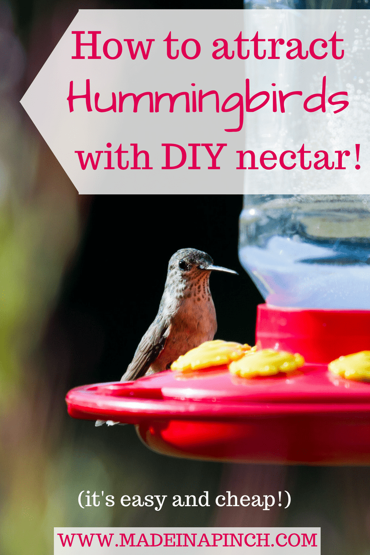 Hummingbird nectar comes from the store full of red dye and is expensive. Making your own hummingbird food is fast, healthier and way cheaper! For this recipe and more helpful tips visit Made in a Pinch and follow us on Pinterest!