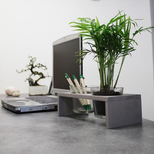 bien choisir sa plante de bureau