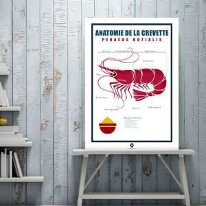 Anatomie de la crevette
