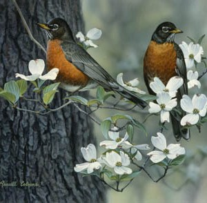 Springtime Robins Giclee Print on Wrapped Canvas by Artist Russell Cobane