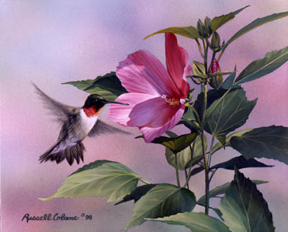 Hibiscus Hummingbird Giclee Print