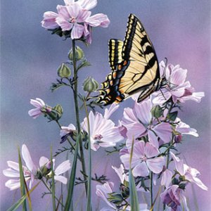 Sweet Landing Giclee Print on Wrapped Canvas by Artist Russell Cobane
