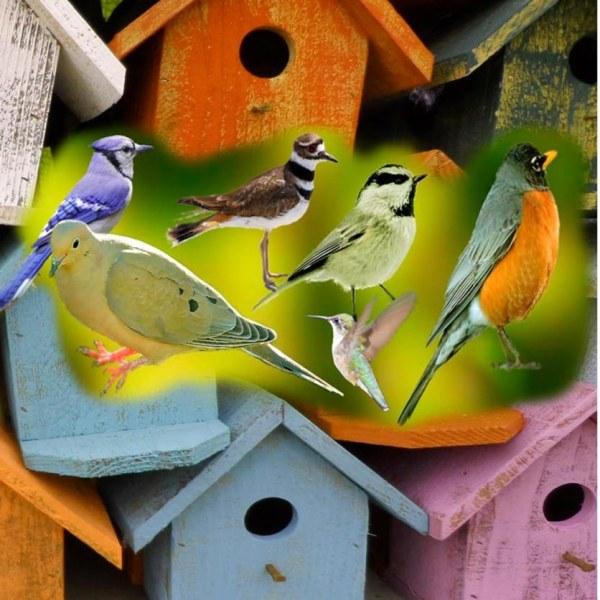 Assorted Birds 2 Image