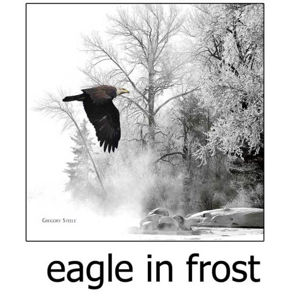 Eagle in Frost