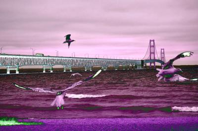Mackinac Bridge Seagulls Wall Art