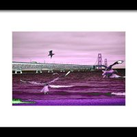Mackinac Bridge Seagulls Print