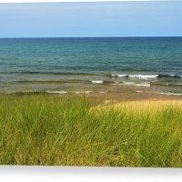 Beach Grass Canvas Print Lake Superior Beach