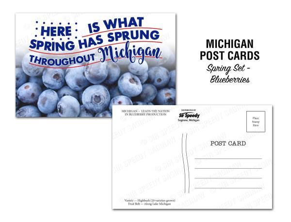 Michigan Blueberries Postcard