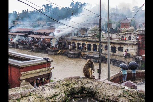 En plus des pertes matérielles, les pertes humaines sont considérables. Quelques semaines après le tremblement de terre, la crémation des corps retrouvés dans les décombres se poursuit, jour et nuit, à Pashupatinath, haut lieu sacré de Katmandou.