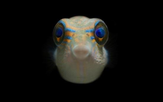 Exposition UPVD - Librairie Cajelice Laboratoire CRIOBE Centre de Recherches Insulaires et Observatoire de l'Environnement Etude des récifs coralliens Polynésie française printemps 2016
